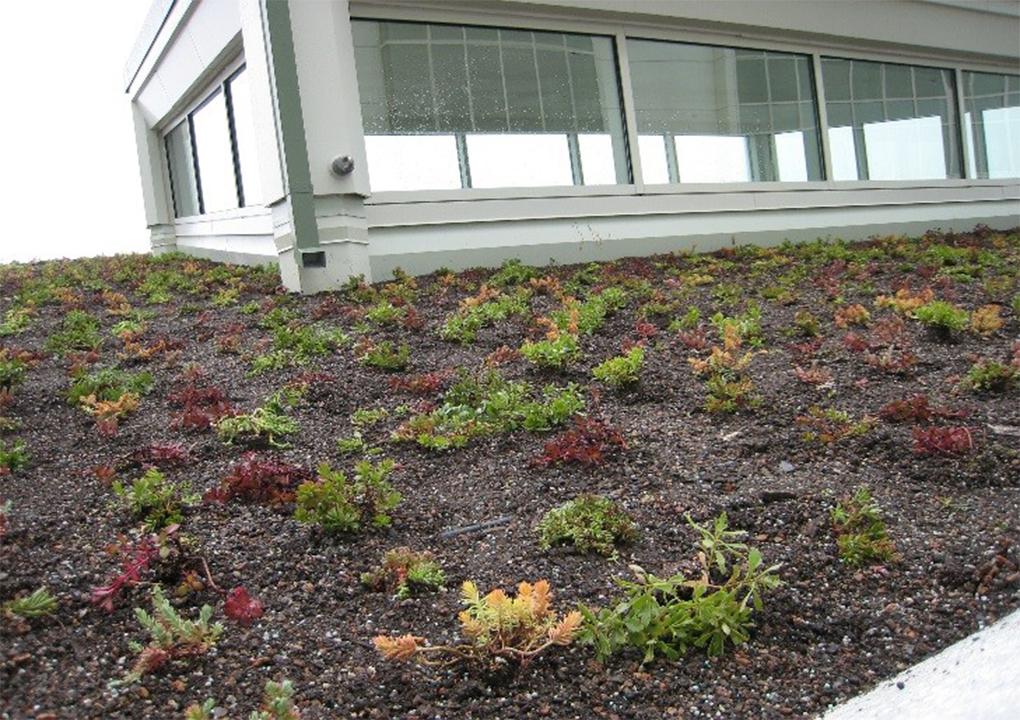 Aurora St Luke S Rooftop Healing Garden And Conservatory