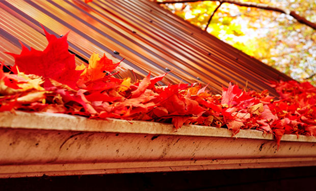Tecta America Commercial Roofing - Fallen Leaves in Gutter